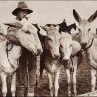 ANZAC Soldier With Donkeys